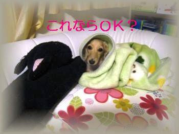 IMG_1344_convert_20111101230317.jpg