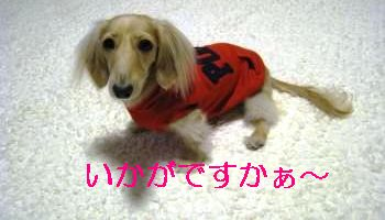 IMG_1365_convert_20111107000916.jpg