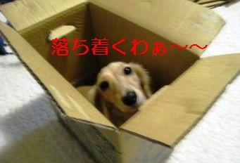 IMG_1371_convert_20111107001255.jpg