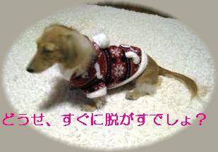 IMG_1375_convert_20111108221540_20111109113516.jpg