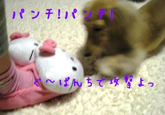 IMG_1382_convert_20111108221324.jpg