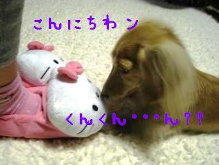 IMG_1383_convert_20111108221351.jpg