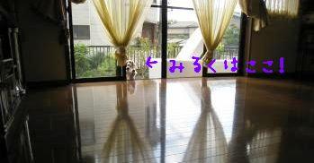 IMG_1423_convert_20111113230133.jpg
