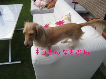IMG_1425_convert_20111113230200.jpg