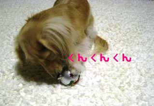 IMG_1439_convert_20111115193830.jpg