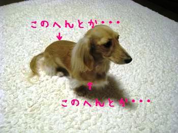 IMG_1443_convert_20111117224309.jpg
