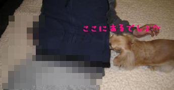 IMG_1470_convert_20111122065800.jpg