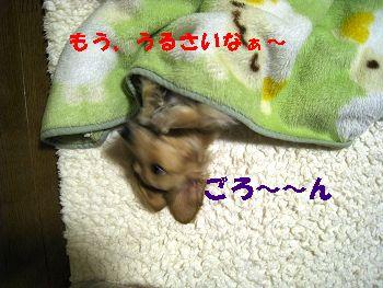 resize3330.jpg