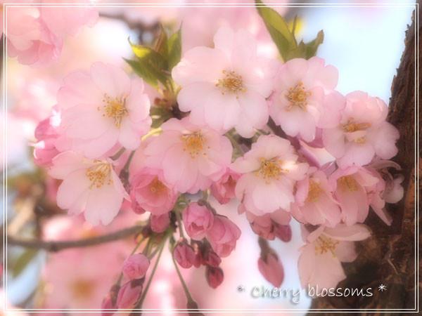 sakura2_20110823145710.jpg