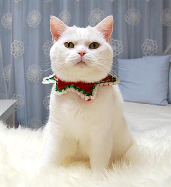 101224_クリスマス01
