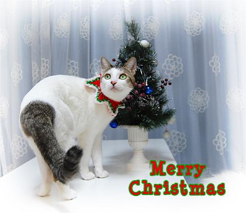 101224_クリスマス05