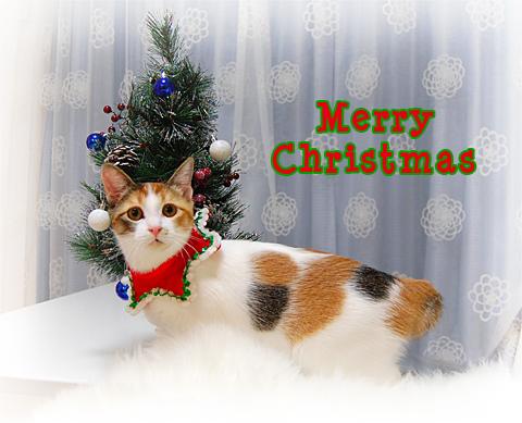 101224_クリスマス03