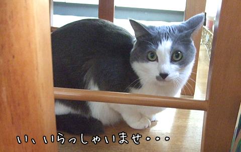 110123_いちこちゃん01