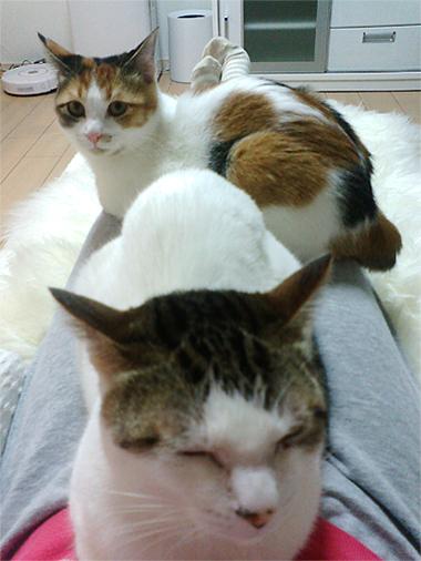 110212_猫パラ01
