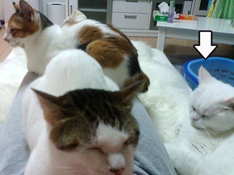110212_猫パラ02