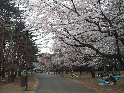 110410_桜03