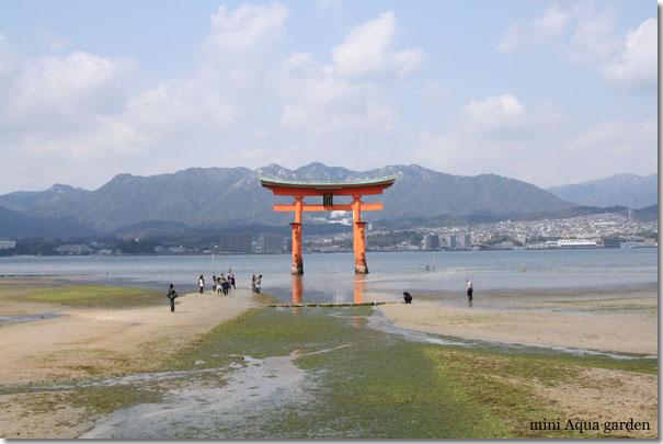 20100311_miyajima4.jpg