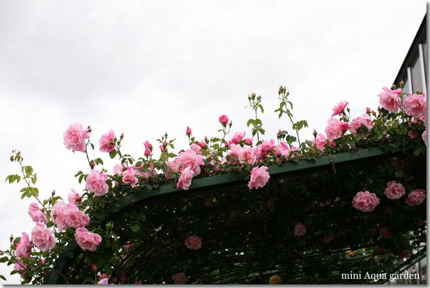 20100515_02.jpg