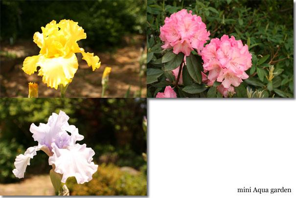 20100515_09.jpg