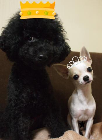 王冠ティアラ