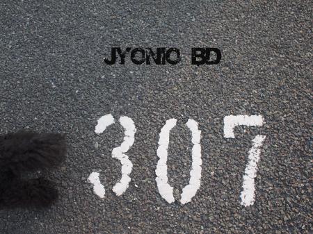 307a.jpg