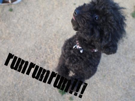 runrunrun_convert_20100314214651.jpg