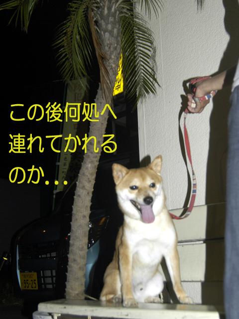 SHINAPAI.jpg