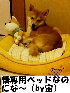 bokusenyou.jpg