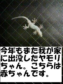 yamoribaby.jpg