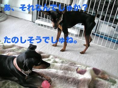 20110618-1.jpg