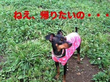 20110620-7.jpg