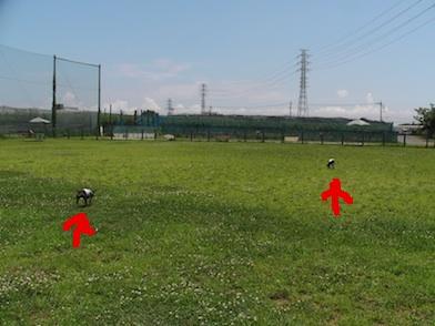 20110710-4.jpg