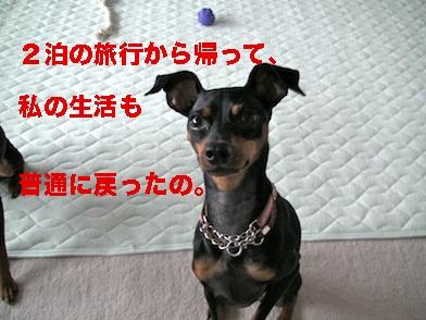 20110720.jpg