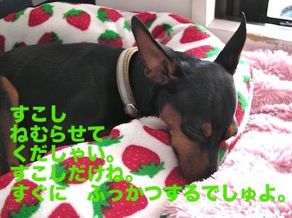 20110817-4.jpg