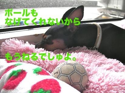 20110819-4.jpg