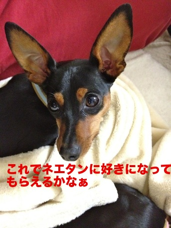 20120227-5.png