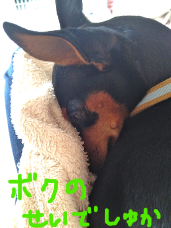 20120308-2.png