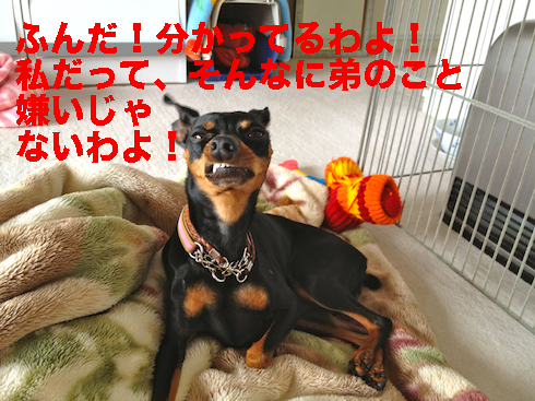 20120310.png