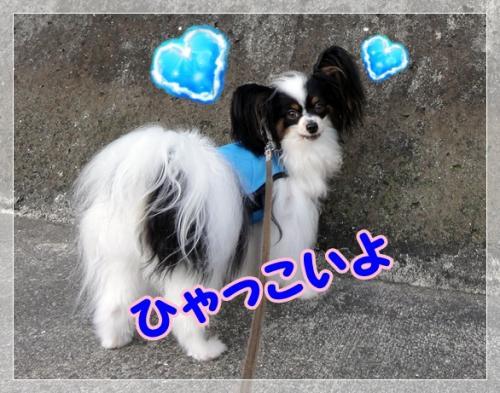 024_20110719115726.jpg