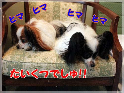 IMG_7829_20110831093312.jpg