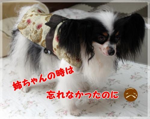 IMG_8026.jpg