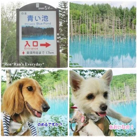 青い池~レンラン