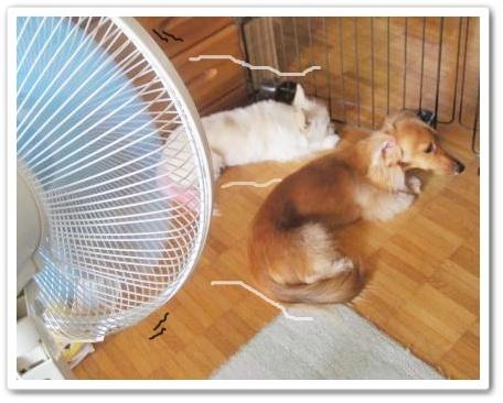 扇風機★レンラン