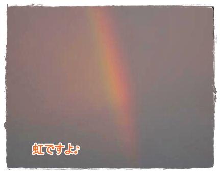 ~虹ですよ~