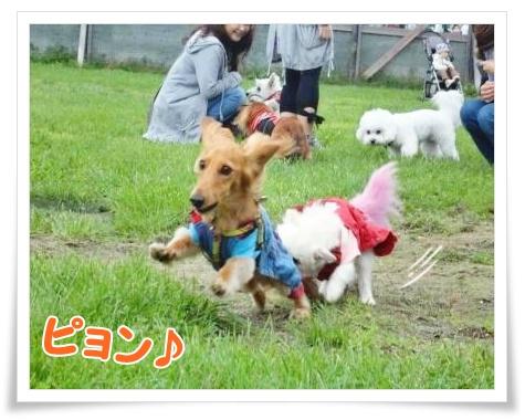 犬の運動会・レンラン