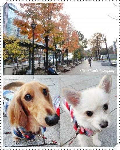 大通り公園~紅葉
