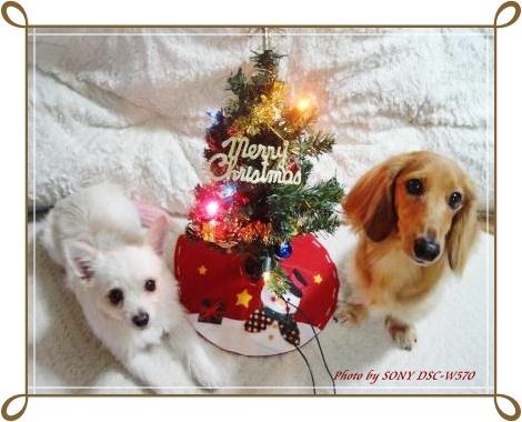 クリスマスツリー・レンラン