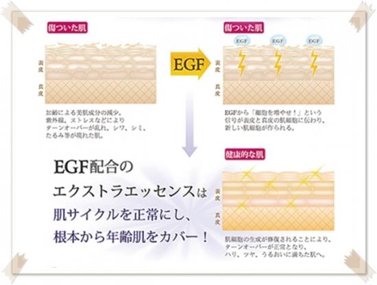 EGFを肌に与えると