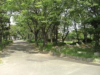 大浜公園5