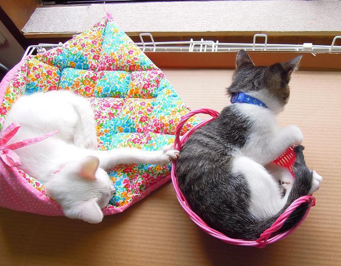 20131109窓辺かご猫